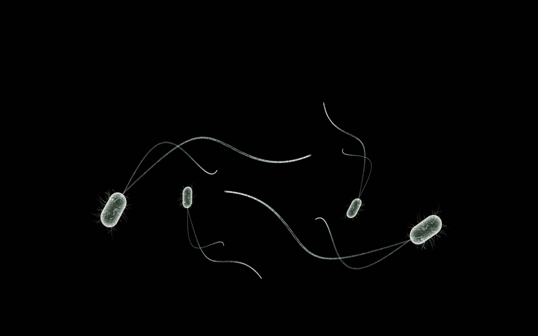 Utjecaj glijadinskih frakcija na rast probiotičkih bakterija iz roda Lactobacillus i njihova adhezija na epitelne stanice karcinoma kolona u in vitro uvjetima